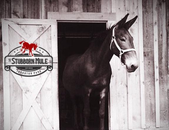 stubborn-mule-2