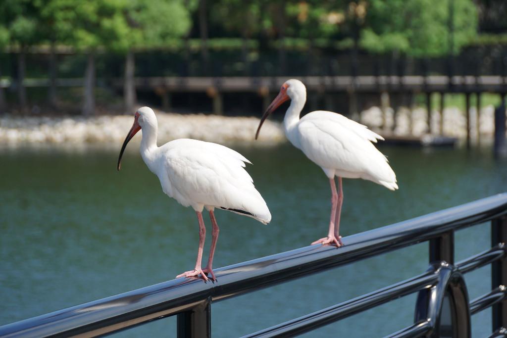 cranes-roost-06
